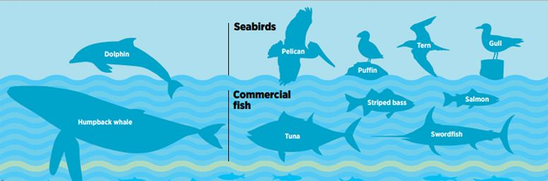 The Fish You Need to Know - Pew Environment Group