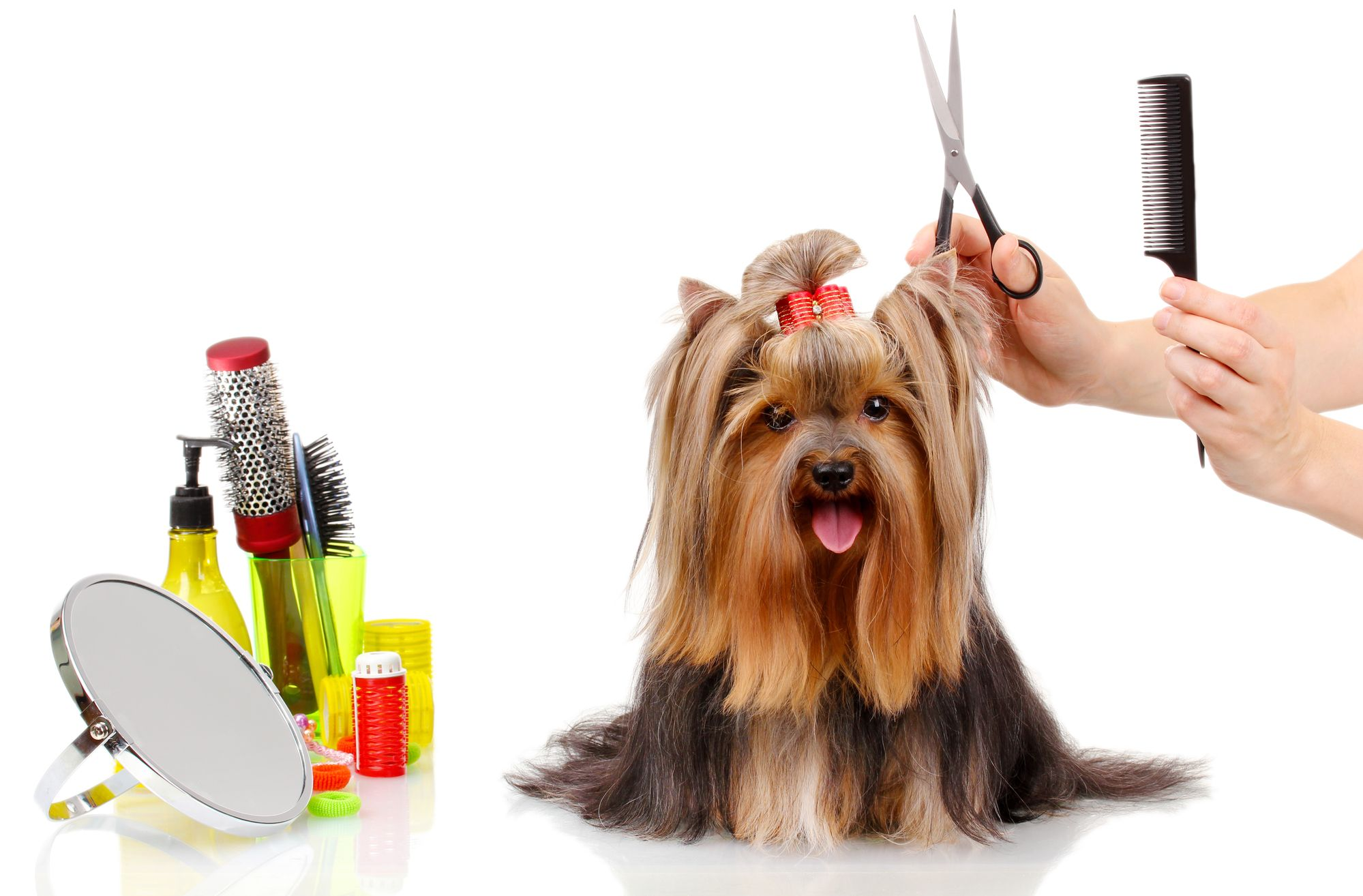 1 Resource For Finding A Pet Groomer Near You Dog Grooming Pets Dog Adventure