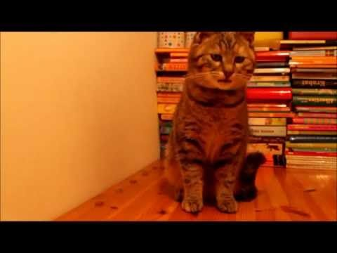 Clickern mit Katzen - Teil 1 - YouTube