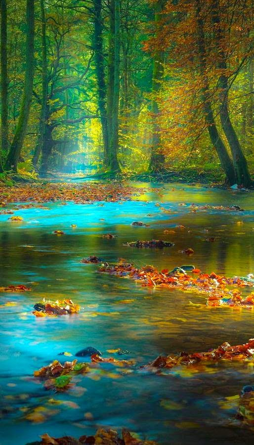 Magic+light+in+the+Spessart+Mountains+of+Bavaria,+Germany.jpg 514×900 piksel