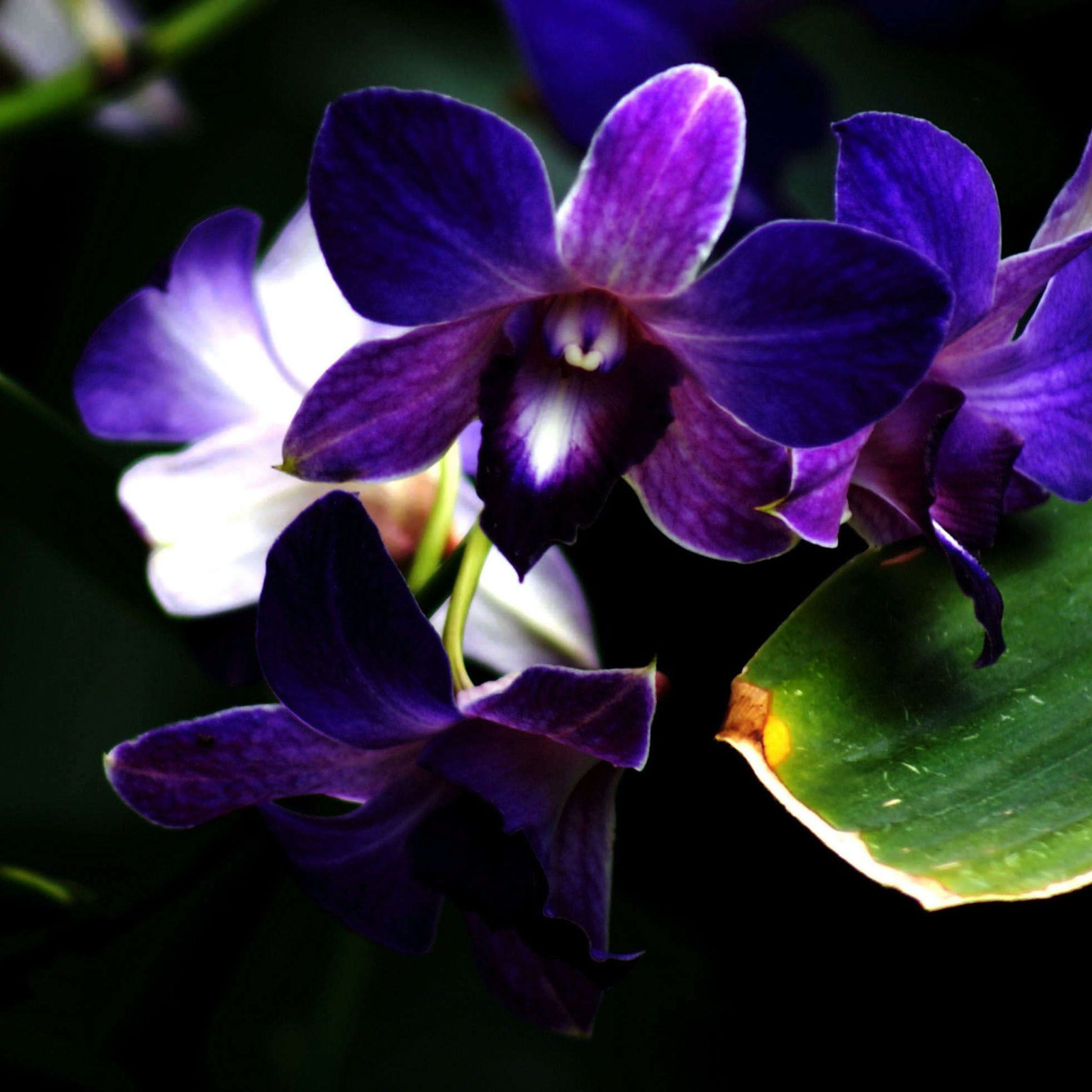 Purple Orchid Flower Photography Hd Ipad Wallpapers