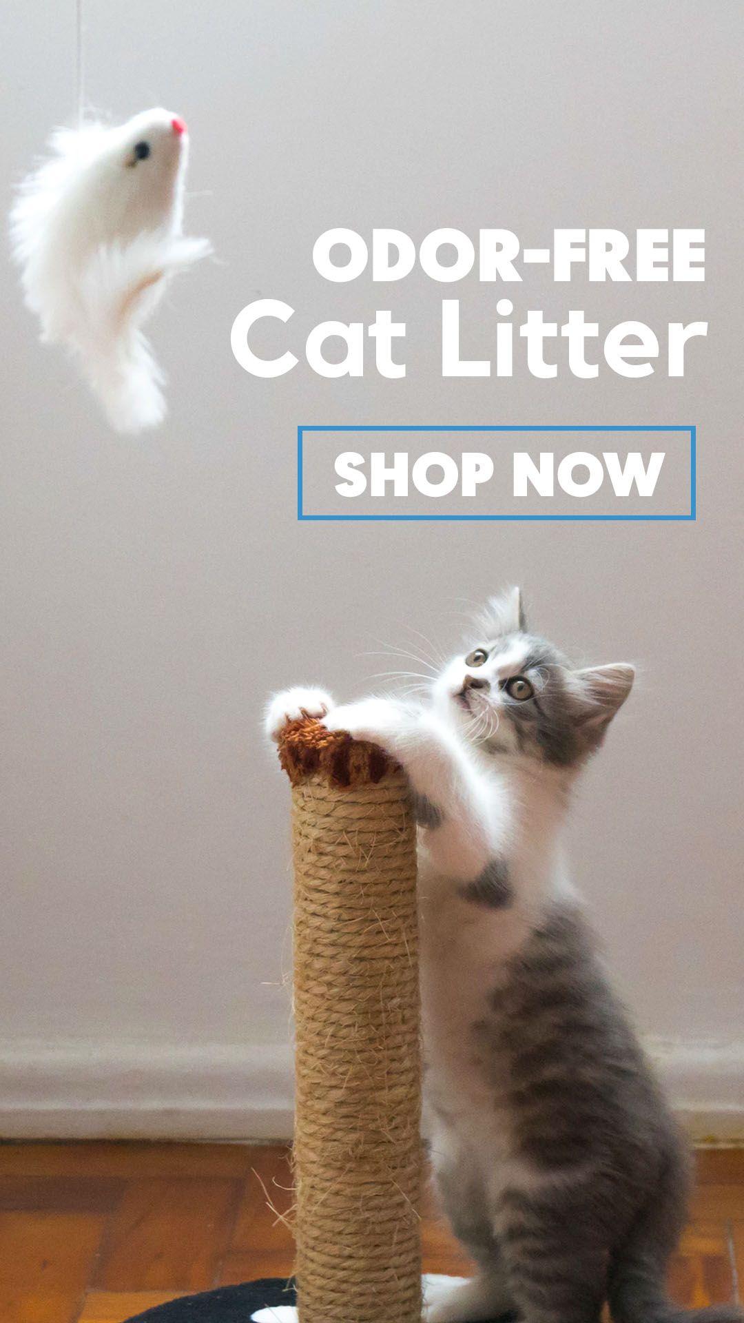 Natural & EcoFriendly Clay Cat Litter Clay cat litter