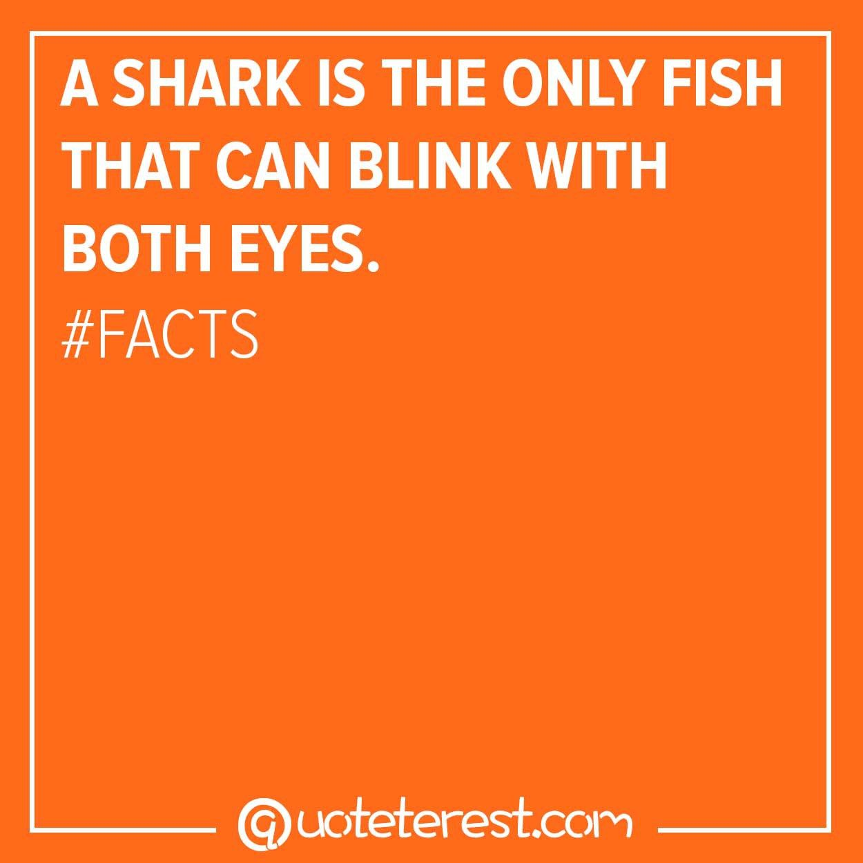 A Shark Is The Only Fish That Can Blink With Both Eyes