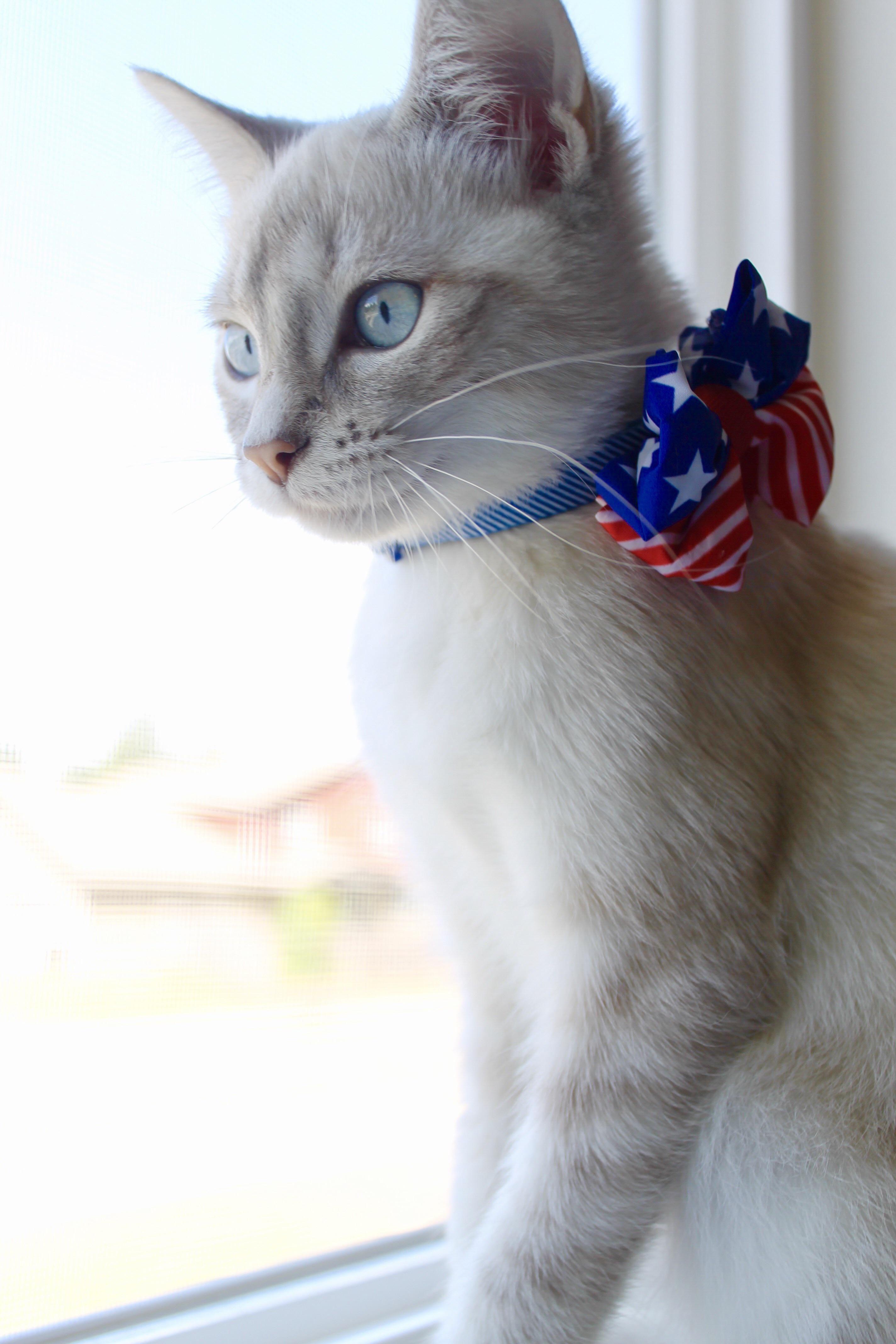 Pin by Jo =^,^= Allen on _PURRoud To Be An AmeriCAT_ Cat