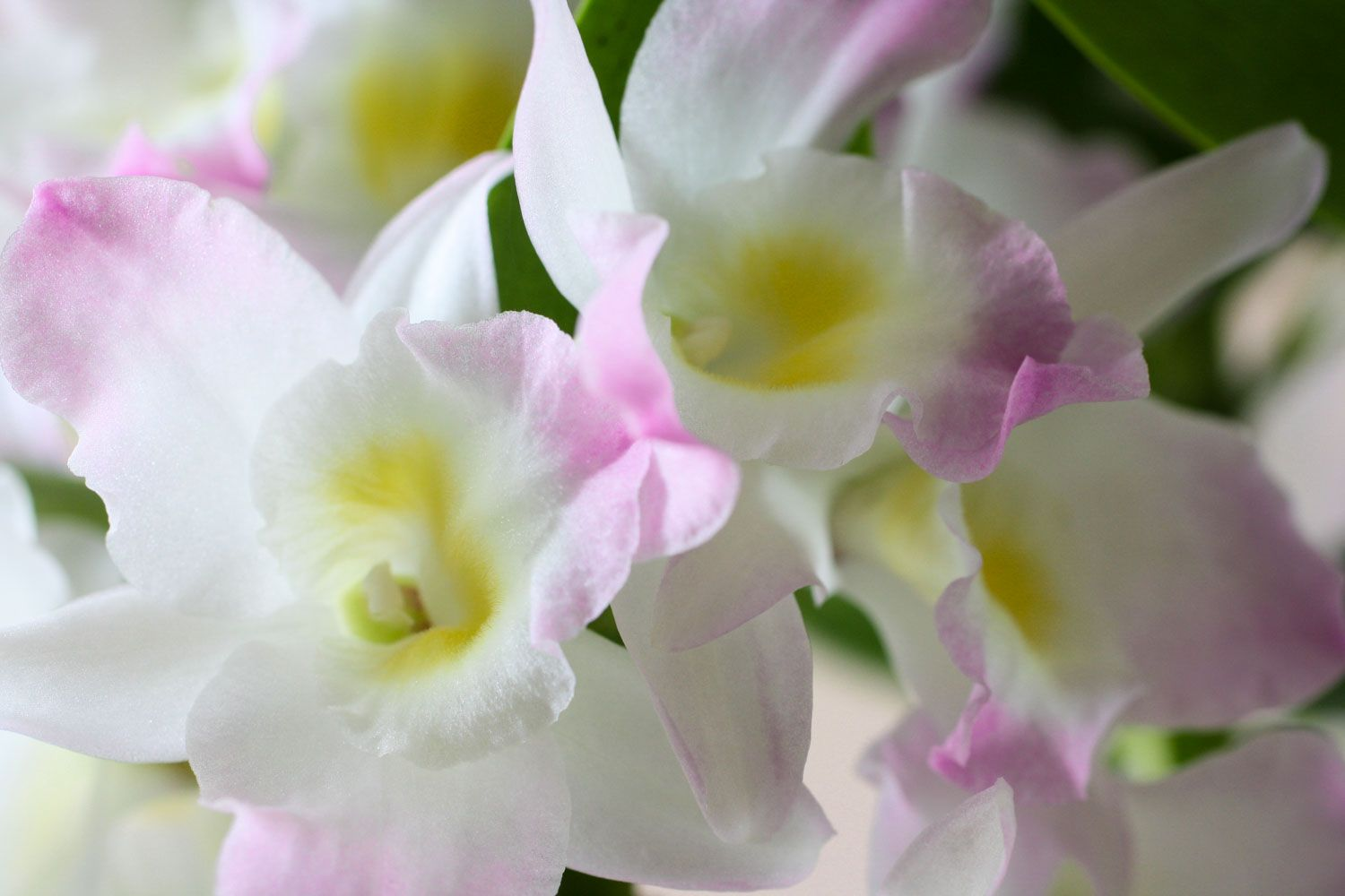 Photo of Fall Care for Orchids -Essential Fall Guide for Your Orchids – Orchid Bliss