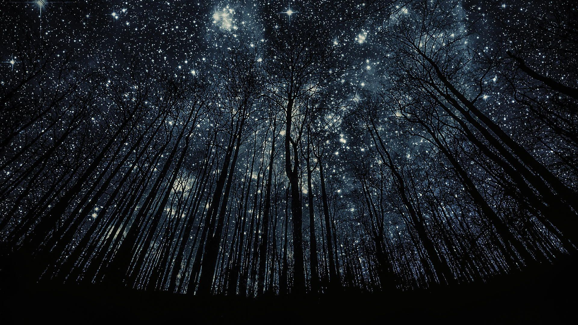 Silhouettes By Harry Finder Imgur Night Sky Photos Night Sky Wallpaper Starry Night Wallpaper Wallpaper starry sky stars forest night