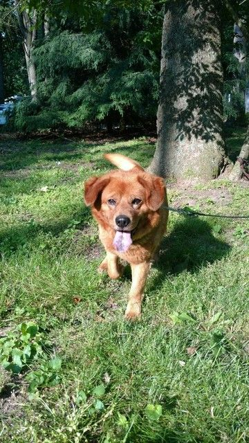 Check Out Chester S Profile On Allpaws Com And Help Him Get