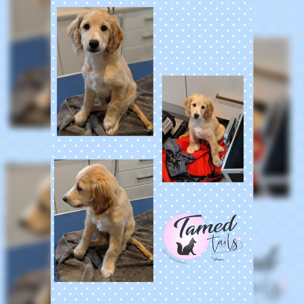 Tamed Tails Flexible Dog Dog Groomers Dog Grooming
