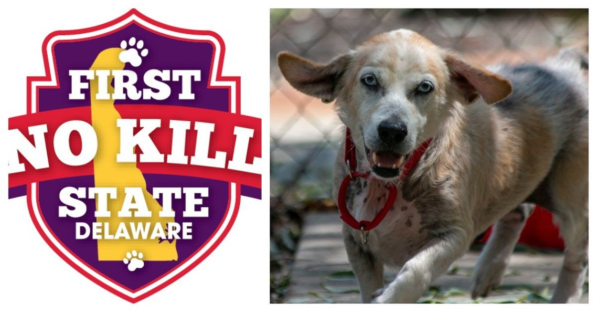 Delaware Becomes The First And Only No Kill Animal Shelter State In The United States No Kill Animal Shelter Animal Shelter Animal Shelter Quotes