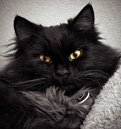 Secrets To Taking Successful Photos Of Black Cats White Cats