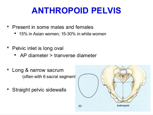 applied-anatomy-of-pelvis-and-fetal-skull-39-638.jpg (638×479 ...