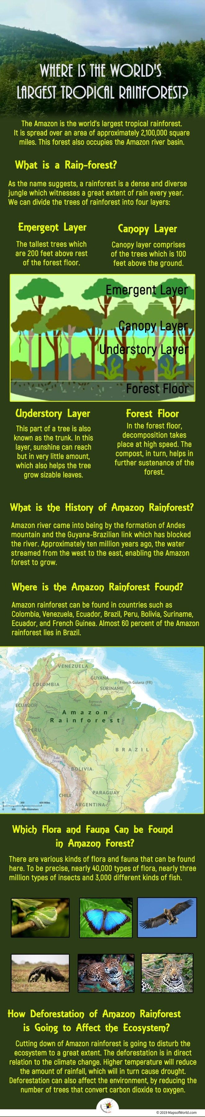 Where is the World's Largest Tropical Rainforest
