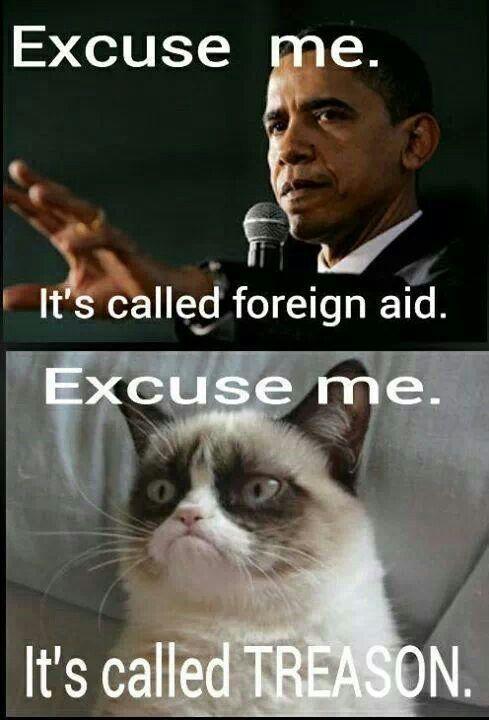 Grumpy Cat Did My Taxes Meme