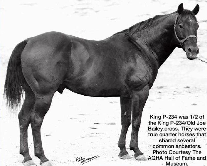 KING P-234