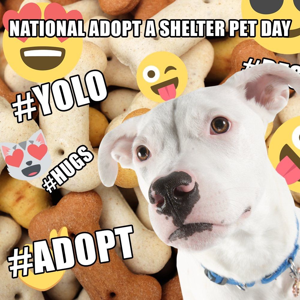 Shelter Pets Are Taking Over Adopt A Shelter Pet Day To Make A