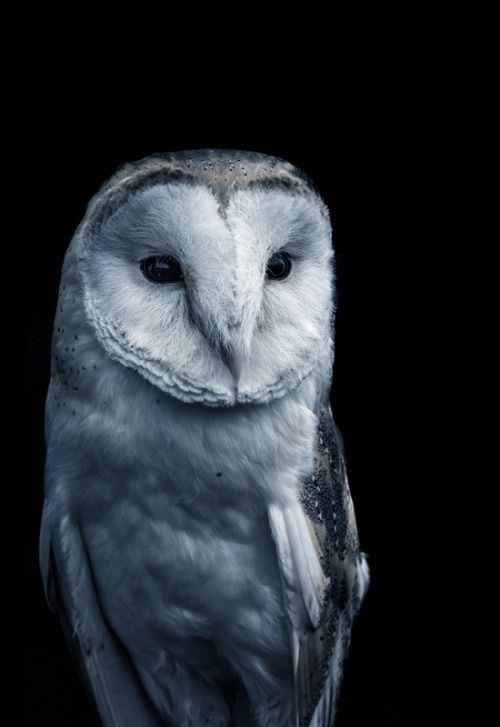 pin by misty forcier on owls pinterest owl harry potter and
