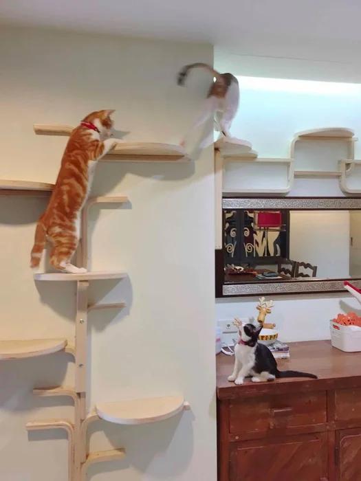 Cat Tree By Frosta X Cat Wall Shelves Ikea Cat Cat Tree
