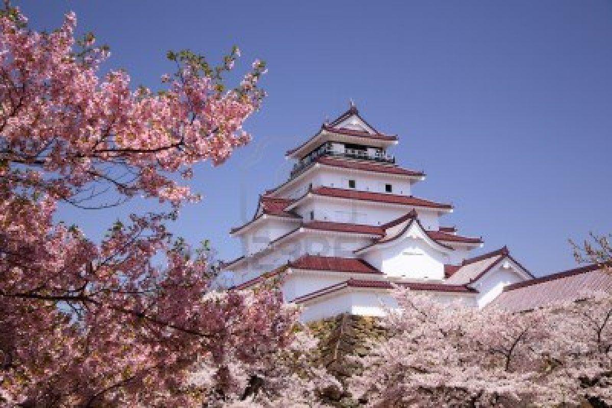Hermoso espetaculo de los cerezos en flor en Japon