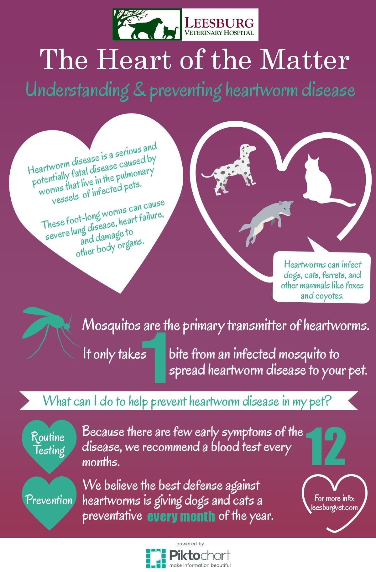 Veterinary Infographic Heartworm Disease Fast Facts