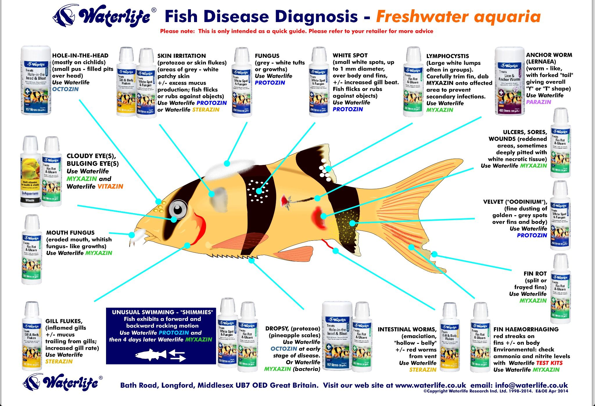 Freshwater aquarium fish size chart - Fish Disease Chart Aquarium Ideasaquarium Fishfreshwater