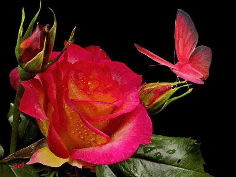 гифка красивый цветок штамбовые