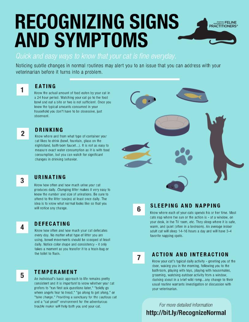 Recognizing Normal Behavior In Your Cat Cat Care Tips Cat Care Kitten Care