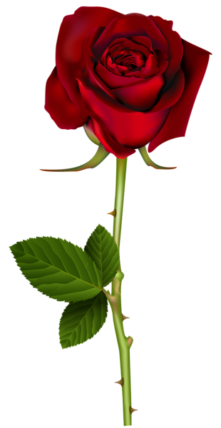 Red Rose Png Transparent Image Red Rose Png Rose Flower Png Beautiful Rose Flowers