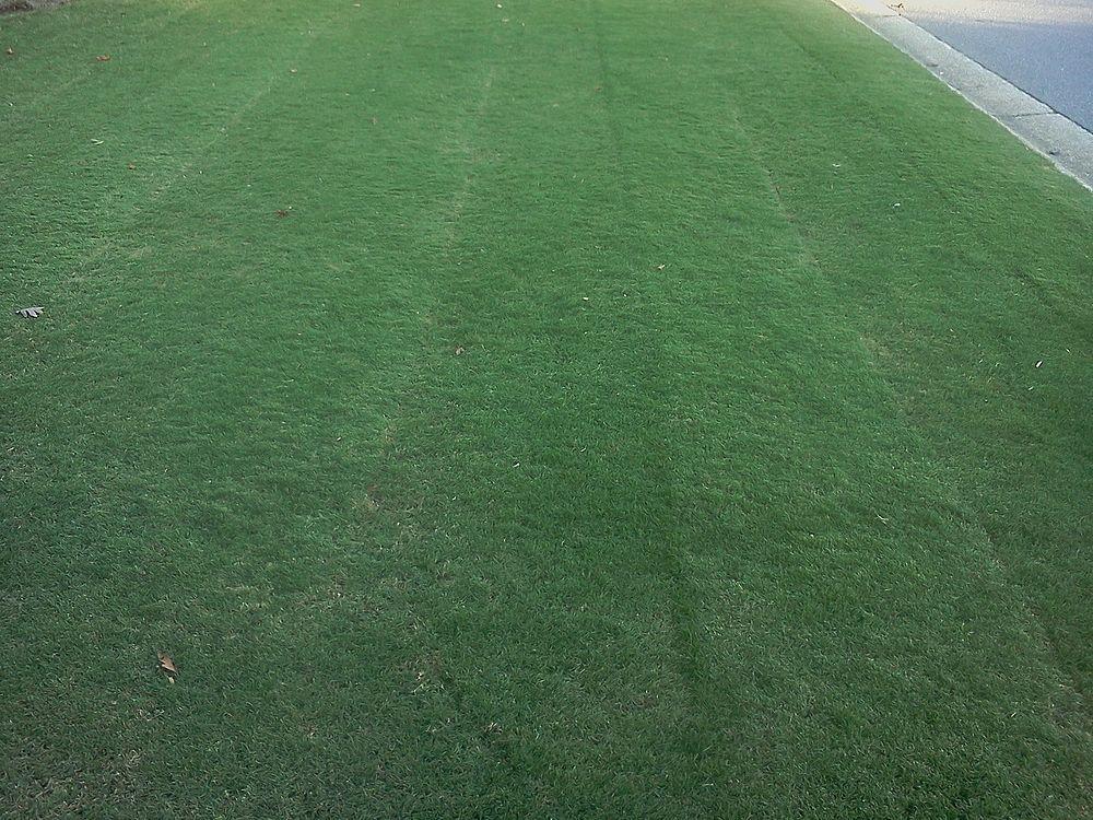 Bermuda Grass 10/20/11 Reelmow 191919 fertilizer