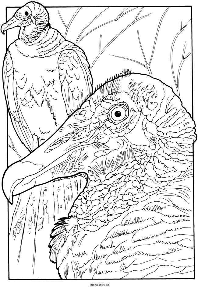 creative haven exotic birds coloring book by ruth soffer coloring page 3 dover publications - Bird Coloring Sheet 3