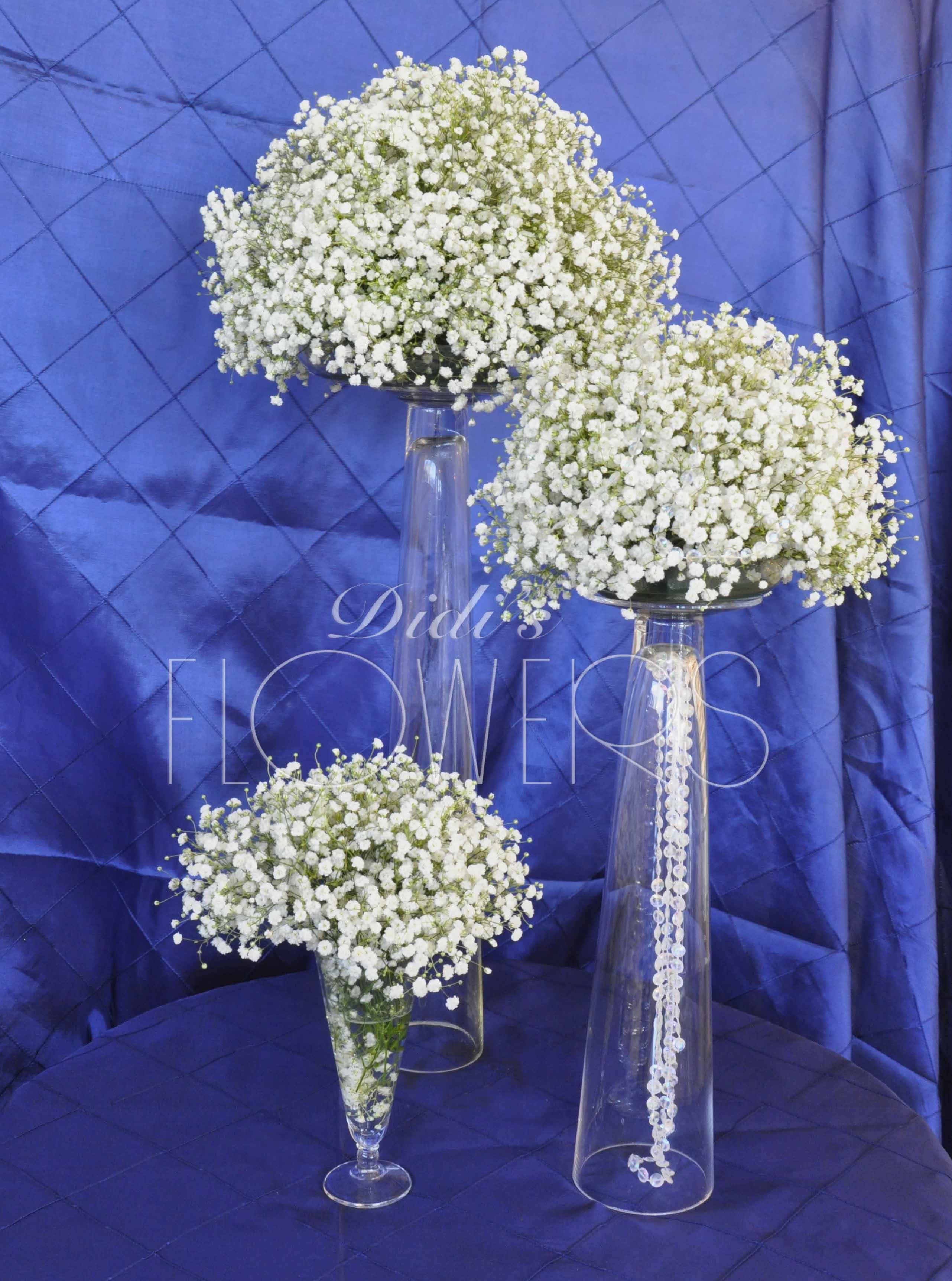 •Baby's breath is a group of perennial and annual plants