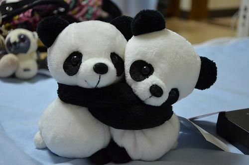Cute Hug Lovely Panda Sweet Teddy Bear Panda Hug Baby Panda Bears Panda Bear