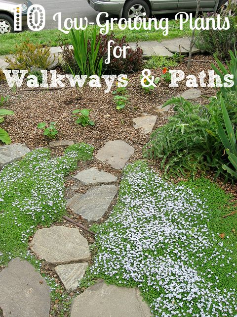 10 low growing plants to consider next to garden walkways for Plants for walkway landscaping ideas