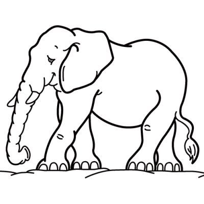 color coloring books at 999 coloring pages - Animal Picture For Colouring