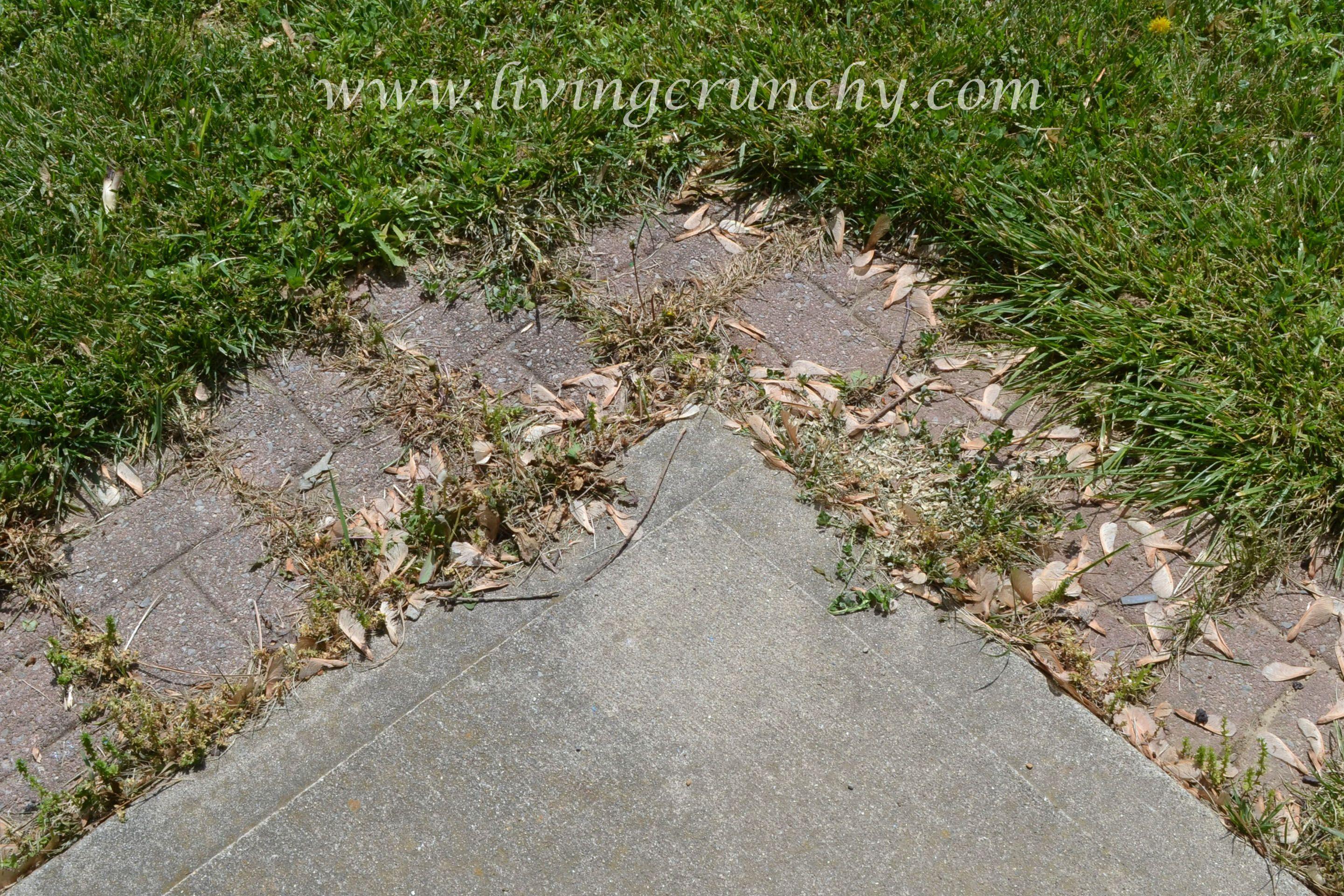 Kill weeds naturally outdoor ideas pinterest gardens