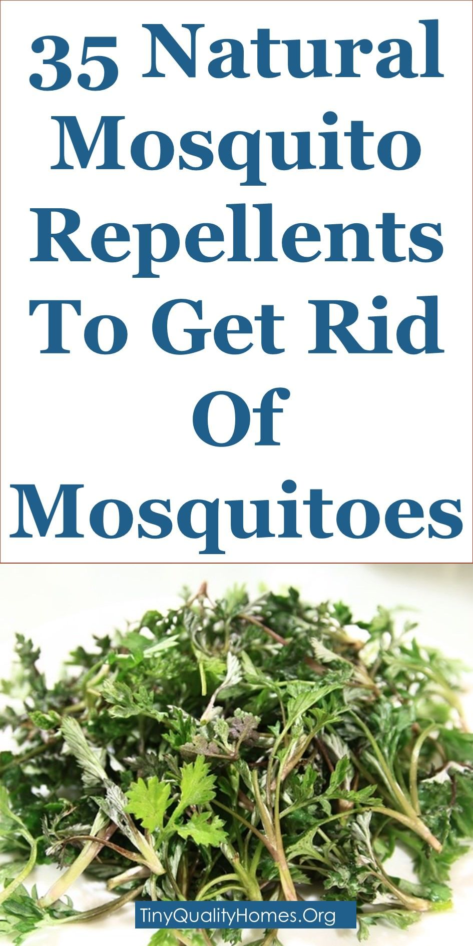 35 Natural Mosquito Repellents To Get Rid Of Mosquitoes Natural