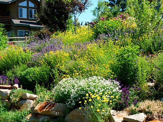 Beautiful Garden Via High Alude Gardening I Want My Hill To Look Like This