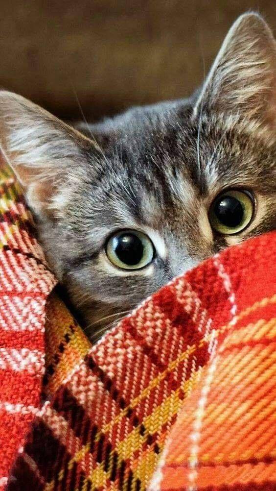 Pin Di Mara Su Gatti Pinterest Razas De Gatos Perro Gato E Gatos
