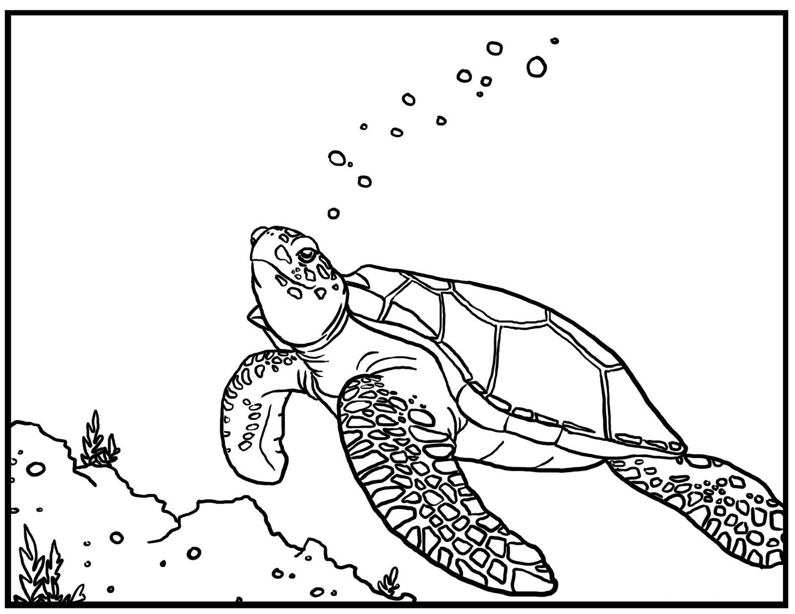 Sea Turtle Coloring Page Free Printable Turtle Coloring Pages For Kids  Business Info