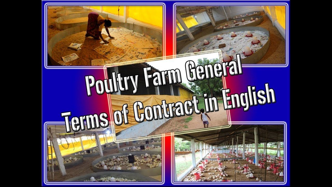 poultry farm general terms of contract in English