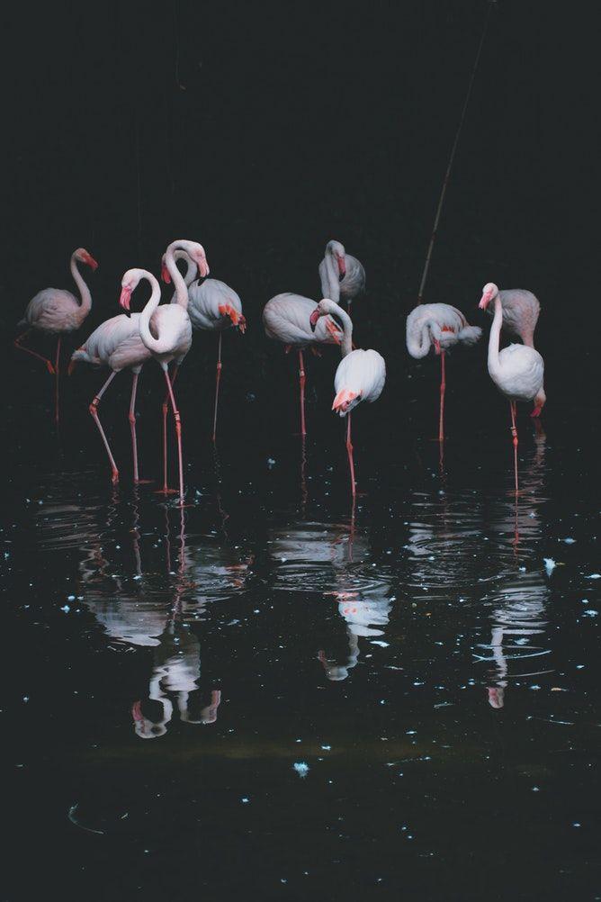 Пин от пользователя Zs J на доске flamingo   Фламинго ...