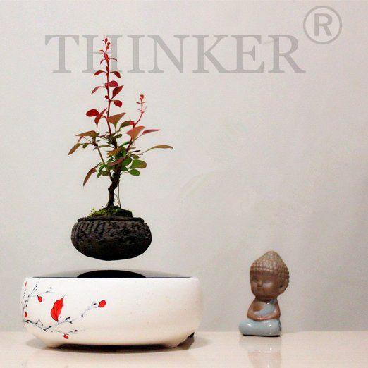 Amazon Com Air Bonsai By Thinker No Plant Plum Blossom Home Kitchen