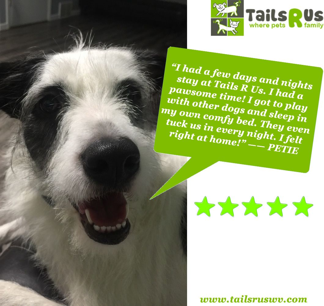 This Message Is Pawsitively Approved By Me For More Information On Our Daycare And Boarding Services Visit Www Tailsruswv Com Sleeping Dogs Dogs Family Pet