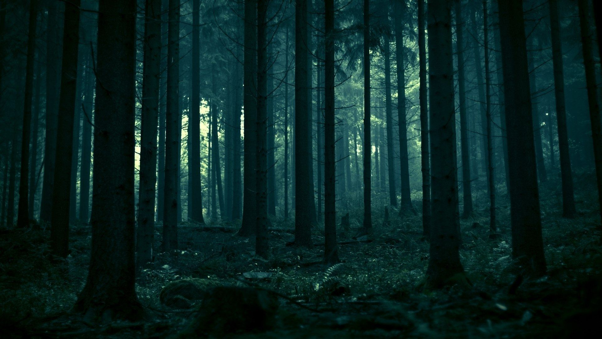 Dark Forest Wallpaper 1920x1080 Jpg 1920 1080 Forest Wallpaper Dark Forest Forest Background Choose from over a million free vectors, clipart graphics, vector art images, design templates, and illustrations created by artists worldwide! dark forest wallpaper 1920x1080 jpg