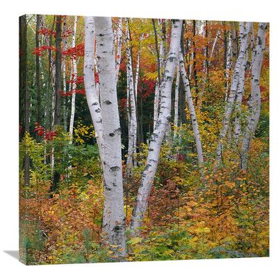 Global Gallery 'Autumn in Shelburne Forest - Triptych Right' by James Randklev Photographic Print on Wrapped Canvas Size: