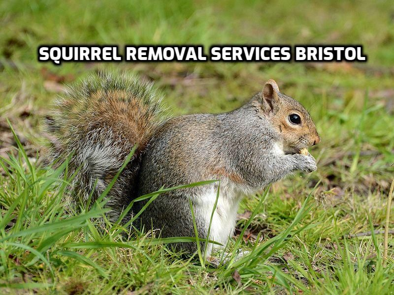 Great plains wildlife & pest removal services in Bristol