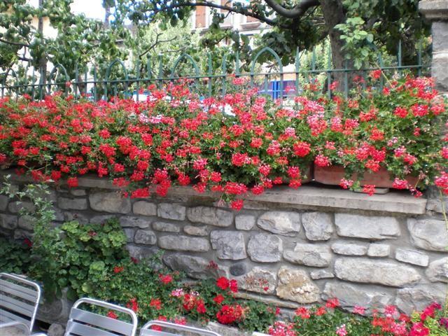 Cultivo De Plantas En Terrazas Y Balcones Gardening