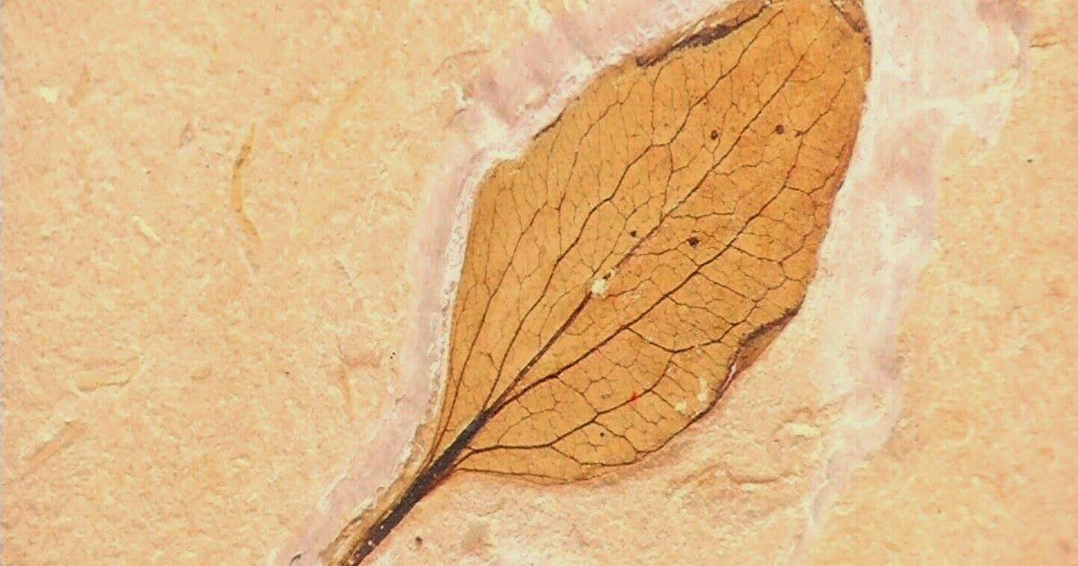 Sol da Trilha Cariri: Fóssil inédito de 120 milhões foi ...