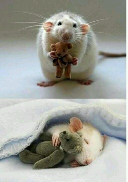 The cutest thing ever!!