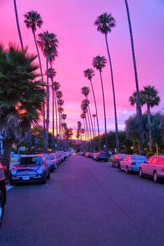 Resultat De Recherche D Images Pour Palmier Rose Californie Degrade Papier Peint Coucher De Soleil Fond D Ecran Palmier Photographie Nocturne