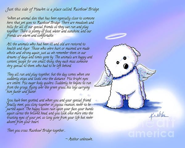 Rainbow Bridge Bichon Angel By Kim Niles Death Of A Pet Dog